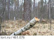 Купить «Сломанное дерево», фото № 461076, снято 4 марта 2008 г. (c) Никончук Алексей / Фотобанк Лори