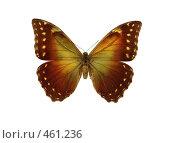 Купить «Бабочка morpho hercules», фото № 461236, снято 14 сентября 2008 г. (c) Саломатников Владимир / Фотобанк Лори