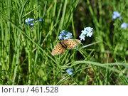 Купить «Бабочка на незабудках», фото № 461528, снято 25 июля 2008 г. (c) Уткин Валерий / Фотобанк Лори