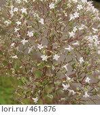 Купить «Валериана лекарственная (Valeriana officinalis)», фото № 461876, снято 10 августа 2008 г. (c) Заноза-Ру / Фотобанк Лори