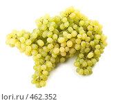 Купить «Верблюжонок из грозди винограда на белом фоне», фото № 462352, снято 24 августа 2008 г. (c) Мельников Дмитрий / Фотобанк Лори