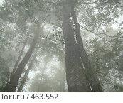 Купить «Туман на горной вершине (высота 2200). Красная Поляна», фото № 463552, снято 5 сентября 2008 г. (c) Карелин Д.А. / Фотобанк Лори