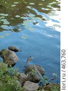 Камни у берега. Стоковое фото, фотограф Юлия Яковлева / Фотобанк Лори