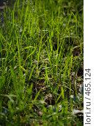 Купить «Трава в лесу», фото № 465124, снято 6 сентября 2008 г. (c) Сергей Пестерев / Фотобанк Лори