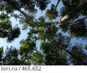 Купить «Летний лес», фото № 465652, снято 17 июля 2008 г. (c) Стучалова Наталия / Фотобанк Лори