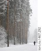 Купить «Снег идёт», фото № 467292, снято 5 марта 2008 г. (c) Юрий Бельмесов / Фотобанк Лори