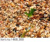 Купить «Камушки», фото № 468300, снято 3 мая 2008 г. (c) Ольга Завгородняя / Фотобанк Лори