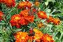 Бабочки, фото № 473688, снято 10 августа 2008 г. (c) Анна Дегтярёва / Фотобанк Лори