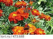 Бабочки. Стоковое фото, фотограф Анна Дегтярёва / Фотобанк Лори