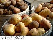 Купить «Картошка», фото № 475104, снято 21 сентября 2008 г. (c) Омельян Светлана / Фотобанк Лори