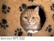 Купить «Кот в домике», фото № 477332, снято 28 апреля 2008 г. (c) Cветлана Гладкова / Фотобанк Лори