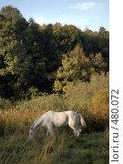 Купить «Лошадь пасется», фото № 480072, снято 21 сентября 2008 г. (c) Куликова Татьяна / Фотобанк Лори