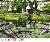 Водная оранжерея Ботанического сада. Санкт-Петербург, фото № 481080, снято 9 августа 2008 г. (c) Заноза-Ру / Фотобанк Лори