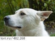 Купить «Собака», фото № 482268, снято 20 сентября 2008 г. (c) Пастухов Максим Владимирович / Фотобанк Лори