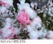 Купить «Первый снег», фото № 485016, снято 27 сентября 2008 г. (c) Юрий Бельмесов / Фотобанк Лори