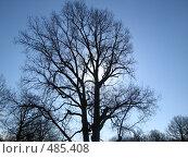 Впереди солнца. Стоковое фото, фотограф Коннов Георгий / Фотобанк Лори