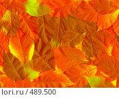Купить «Фон из красных листьев», фото № 489500, снято 19 сентября 2018 г. (c) ElenArt / Фотобанк Лори