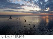 Утренняя проба крыла. Стоковое фото, фотограф николай шишкин / Фотобанк Лори