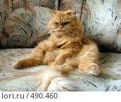 Рыжий кот. Стоковое фото, фотограф ElenArt / Фотобанк Лори
