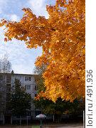 Купить «Желтый клен», фото № 491936, снято 2 октября 2008 г. (c) Анжелина Селинская / Фотобанк Лори