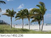 Майами. Пляж. Пальмы (2007 год). Редакционное фото, фотограф Андрей Гривцов / Фотобанк Лори