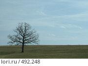 Одинокое дерево в поле. Стоковое фото, фотограф Андрей Гривцов / Фотобанк Лори