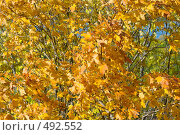 Купить «Осень в парке», фото № 492552, снято 2 октября 2008 г. (c) Виктория Кириллова / Фотобанк Лори