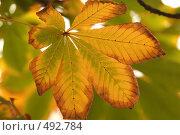Каштан осенью. Стоковое фото, фотограф Сергей / Фотобанк Лори