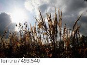 Купить «Осеннее настроение», фото № 493540, снято 30 сентября 2008 г. (c) Светлана Мамонтова / Фотобанк Лори