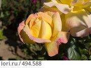 "Купить «Роза ""Gloria Day""», фото № 494588, снято 19 августа 2008 г. (c) Константин Чевелёв / Фотобанк Лори"