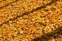 Осенний фон с желтыми листьями, эксклюзивное фото № 494648, снято 5 октября 2008 г. (c) Александр Алексеев / Фотобанк Лори