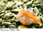 Купить «Красивая морская раковина», фото № 495740, снято 6 сентября 2008 г. (c) Вероника Галкина / Фотобанк Лори