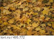 Купить «Осень», фото № 495772, снято 4 октября 2008 г. (c) Максим Кузнецов / Фотобанк Лори