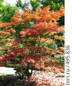 Купить «Японский садик», фото № 495836, снято 10 августа 2008 г. (c) Пичугина Виктория / Фотобанк Лори