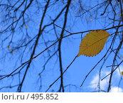 Купить «Осенний лист на фоне неба», фото № 495852, снято 5 октября 2008 г. (c) Юрий Винокуров / Фотобанк Лори