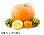 Купить «Декоративные зеленые и оранжевые тыквы», фото № 497156, снято 17 декабря 2017 г. (c) Коннов Леонид Петрович / Фотобанк Лори
