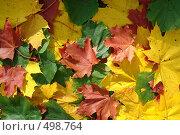 Купить «Ковёр из осенних листьев», фото № 498764, снято 6 октября 2008 г. (c) Зябрикова Надежда / Фотобанк Лори