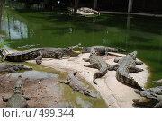 Крокодилы (2008 год). Стоковое фото, фотограф Сергей Анисимов / Фотобанк Лори