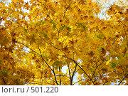 Купить «Осенний лес», фото № 501220, снято 4 октября 2008 г. (c) Лифанцева Елена / Фотобанк Лори