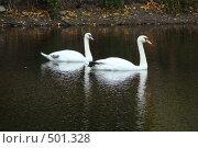 Купить «Парное плаванье», фото № 501328, снято 4 октября 2008 г. (c) Игорь Полётов / Фотобанк Лори