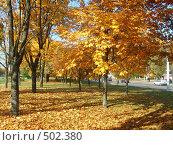 Купить «Осенние каштаны на солнце», фото № 502380, снято 9 октября 2008 г. (c) Римма Радшун / Фотобанк Лори