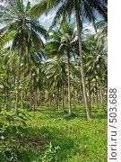 Купить «Пальмы», фото № 503688, снято 25 июня 2008 г. (c) Купченко Владимир Михайлович / Фотобанк Лори