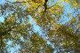 Осенний лес, фото № 503716, снято 28 июля 2017 г. (c) Михаил / Фотобанк Лори