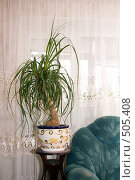 Купить «Бокарнея», фото № 505408, снято 12 октября 2008 г. (c) Елена Блохина / Фотобанк Лори
