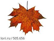 Купить «Осенний кленовый лист на белом фоне», фото № 505656, снято 26 июня 2019 г. (c) Владимир Сергеев / Фотобанк Лори