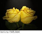 Купить «Две жёлтые розы на чёрном бархатном фоне», фото № 505664, снято 4 октября 2008 г. (c) Кардаполова Наталья / Фотобанк Лори