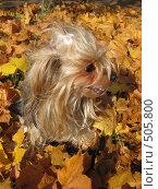 Купить «Осенний беспорядок», фото № 505800, снято 4 октября 2008 г. (c) Olga Nikolaeva / Фотобанк Лори