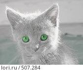 Купить «Кошка зеленые глаза», фото № 507284, снято 12 октября 2008 г. (c) Чернов Станислав / Фотобанк Лори