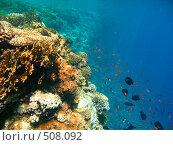 Купить «Стая рыб на коралловом рифе Красного моря», эксклюзивное фото № 508092, снято 1 октября 2008 г. (c) Владимир Чинин / Фотобанк Лори