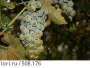 Виноградная гроздь. Стоковое фото, фотограф Александр Бутенко / Фотобанк Лори
